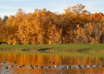 Slate Run image of water front with ducks on water and refection of fall leaves